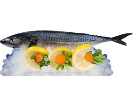 Морски риболов Скумрия замразена